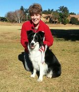 Ch Venron Imbali Queen doing Obedience in Gauteng, South Africa